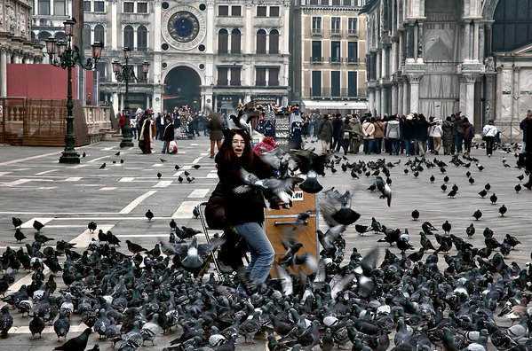 Benátky - holuby
