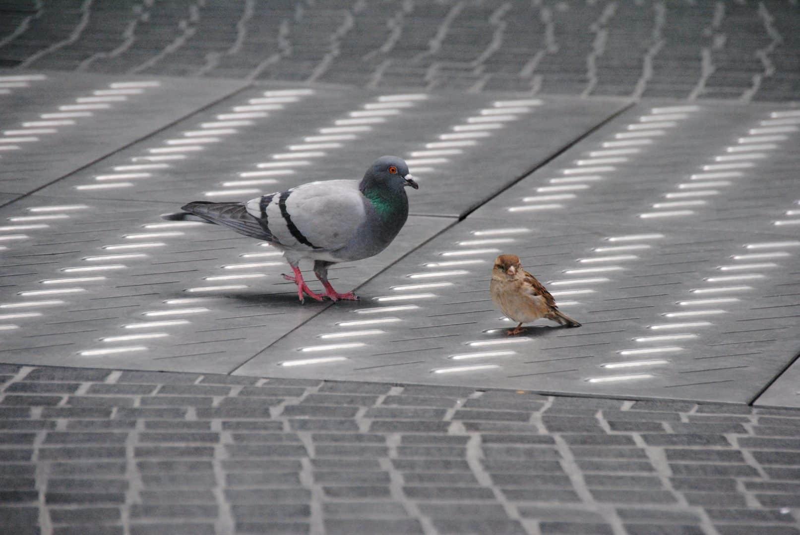 vrabec a holub