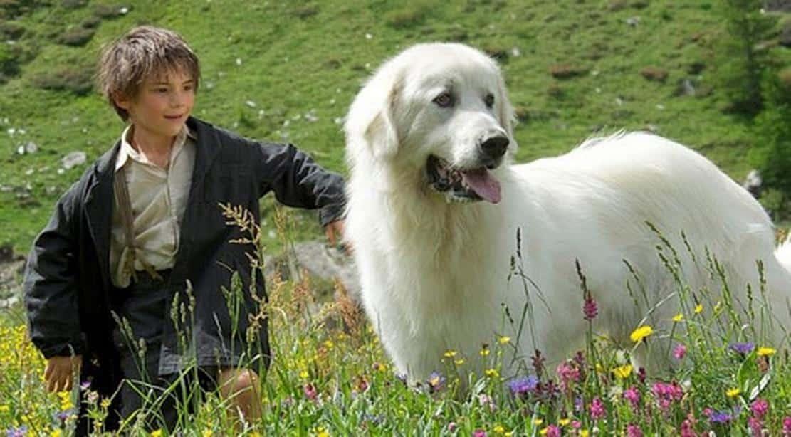Filmy o psoch