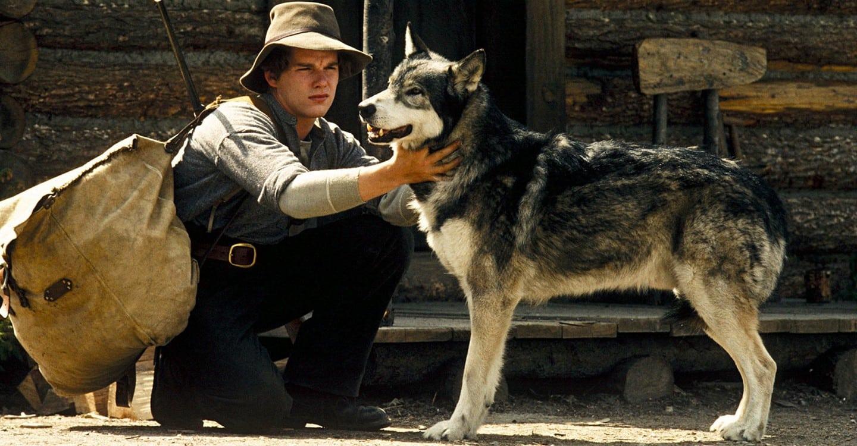 Biely tesák filmy o psoch